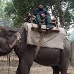 Elephant safari in satpura tiger reserve