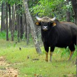 satpura nature walk