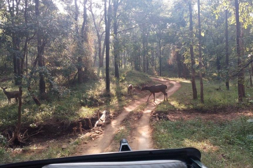 satpura jeep safari, satpura safari